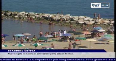 TVI News delle ore 14 del 17 MAGGIO